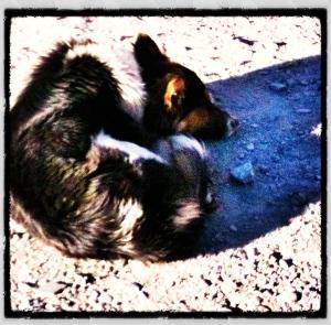 Perrito en Salta, camino a Humahuaca.