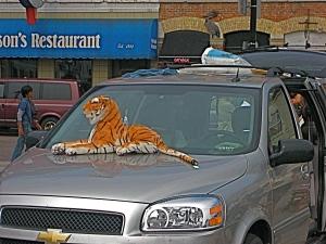 ¿un trabajo en el circo, quizá? ¿Cómo domador de tigres? (foto sacada en Kingston, Canadá)